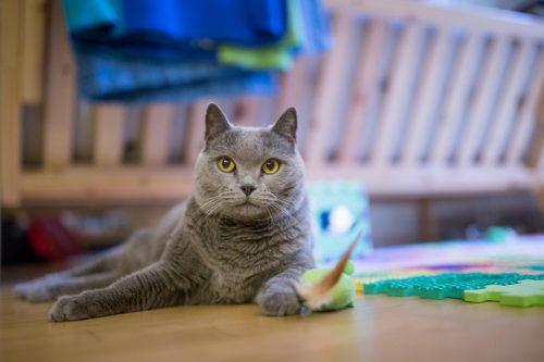 Kapsičky pro mlsné kočičí jazýčky