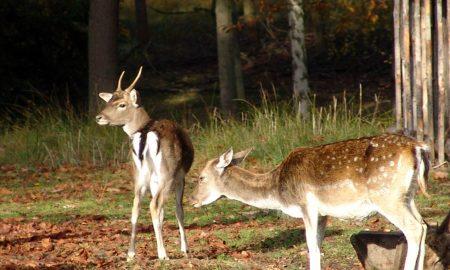 Svatojiřský les u Chateau Mcely vám nabídne přírodní poklady.