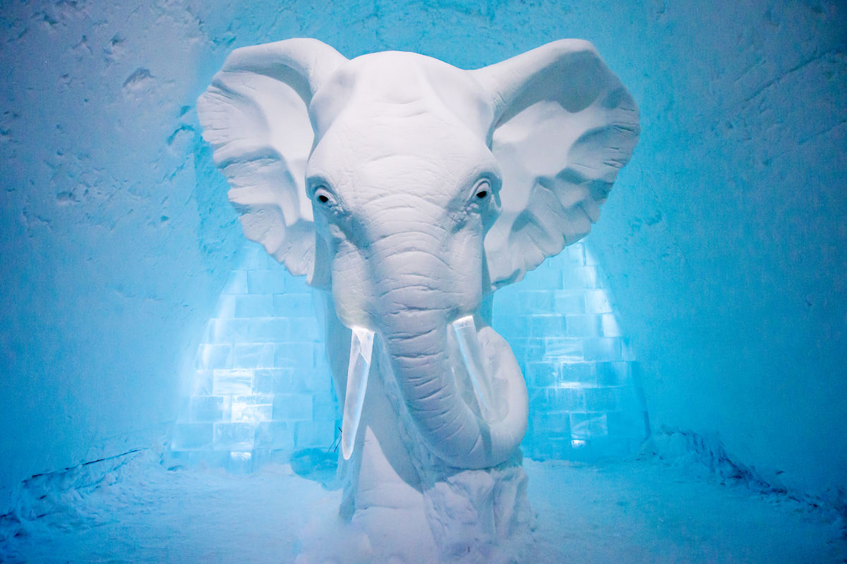 medium_art-suite-elephant-in-the-room-icehotel-sweden
