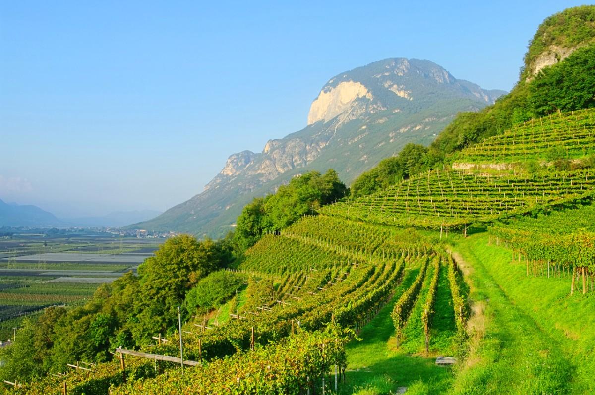 trentino-alto-adige-typical-mountain-vineyard