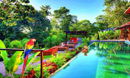 web_Nayara Springs Lap pool with Macaw